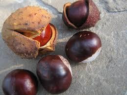 remedos con castaño de indias