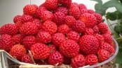 remedios con fresas