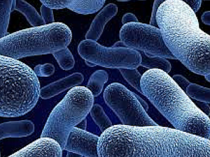 remedios gastroenteritis