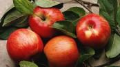 remedios con manzana