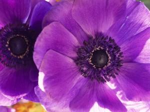 remedios con violeta