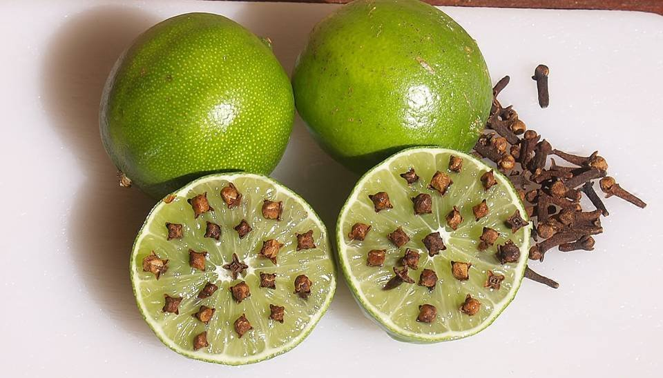 Remedios naturales para alejar insectos repelentes caseros - Ambientador natural para casa ...