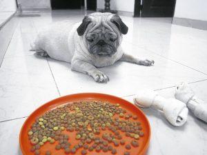 remedios para el perro sin apetito