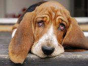 remedios diarrea en perros
