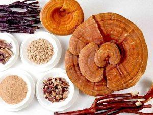 hongos medicinales y sus propiedades