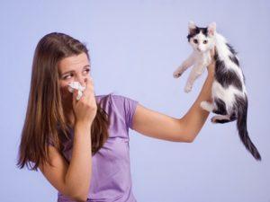remedios alergia a los animales