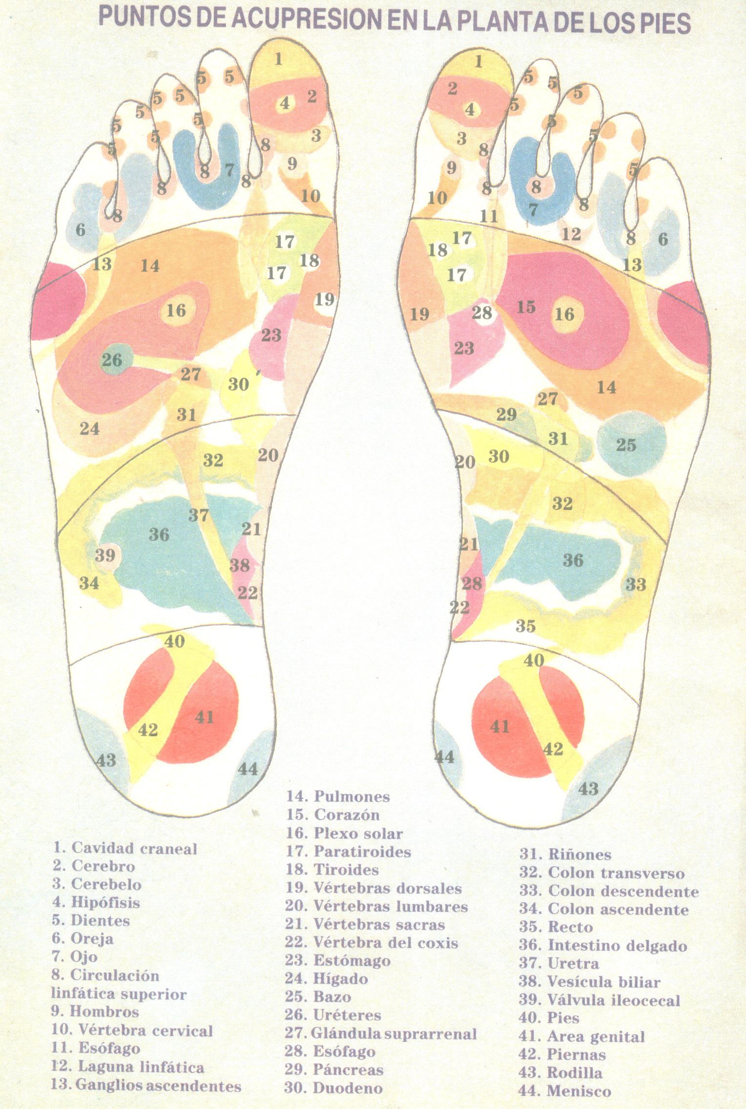 mapa de acupresion pies