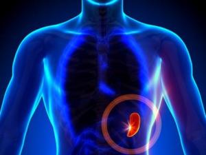 remedios inflamación bazo