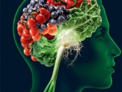 alimentos para un cerebro sano