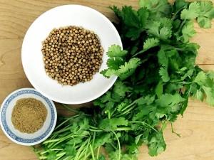 el cilantro es malo para la gastritis