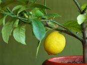 cultivar plantas medicinales