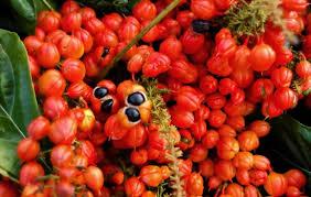 remedios cn guarana