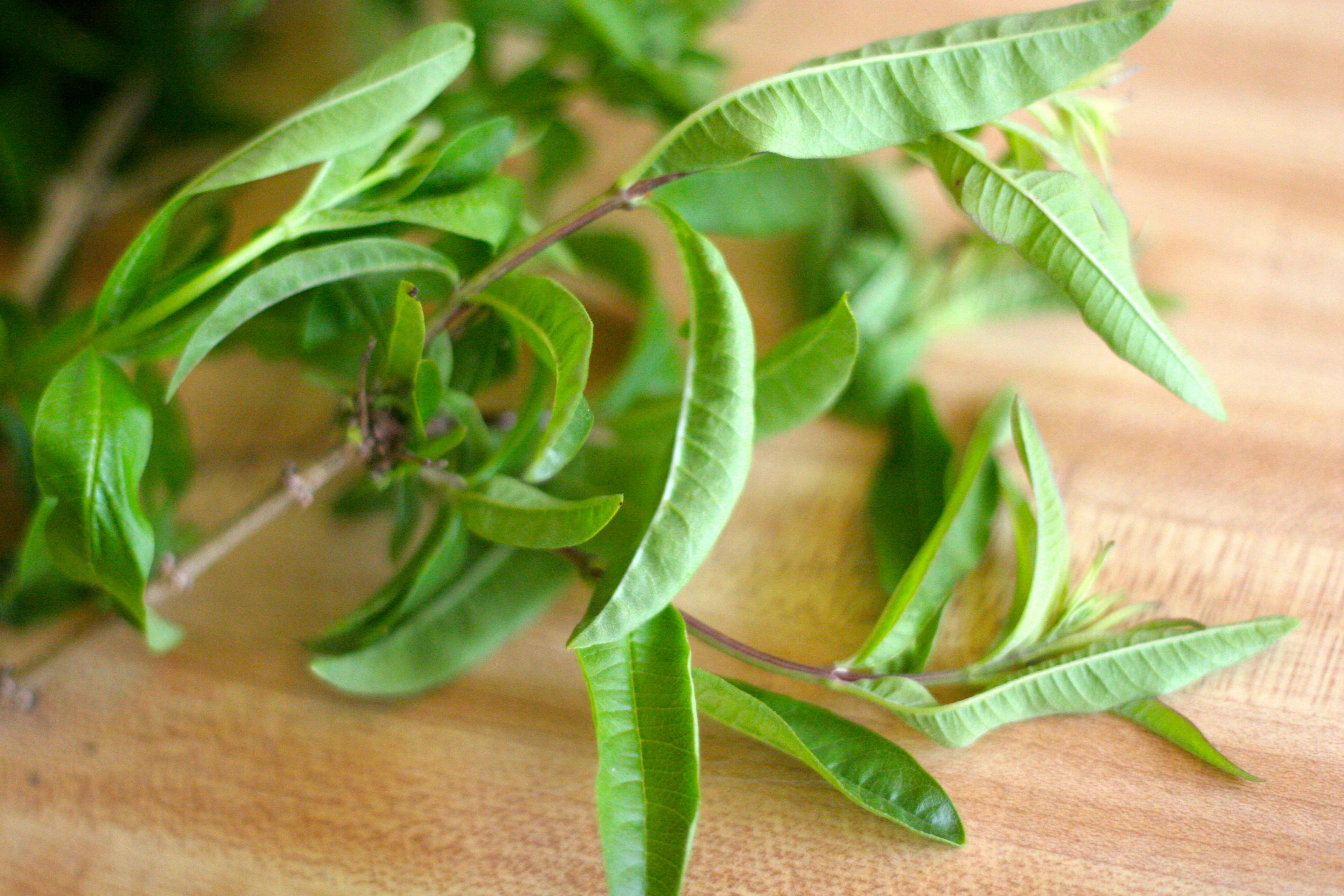 Remedios con hierba luisa o cedrón para tos, ansiedad y más