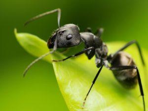 remedios ecológicos para las plagas