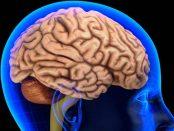 remedios para el riego cerebral