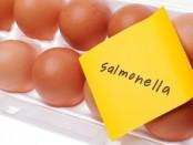 remedios salmonella