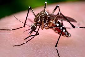 remedios para el dengue