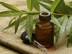 remedios arbol del te