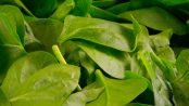 propiedades de la espinaca