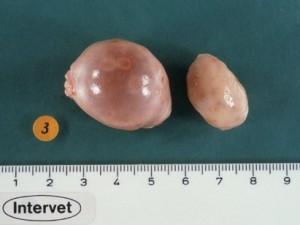 remedios para quistes en los ovarios