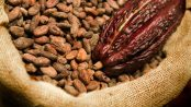 remedios con cacao