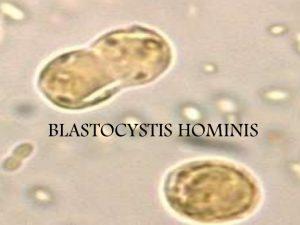 parasito blastocystis hominis