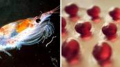 beneficios del aceite de krilll