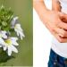 Contraindicaciones de la eufrasia y efectos secundarios
