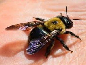 remedios para picadura de insecto