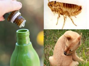 aceites esenciales para las pulgas
