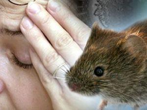 remedios para leptospirosis