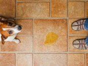 remedios incontinencia orinaria en perros