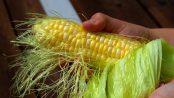 propiedades de la barba de maíz