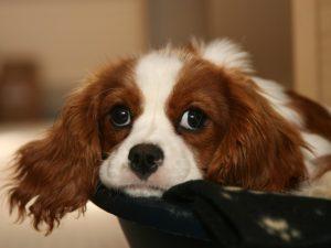 gases en perros