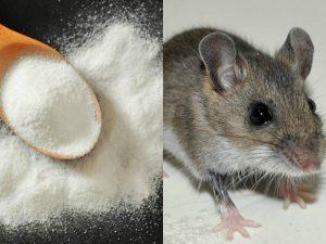 remedios para eliminar ratones y ratas