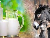 Para que sirve la leche de burra negra