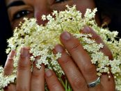 flor de sauco para la piel