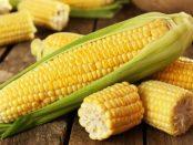 propiedades del maiz