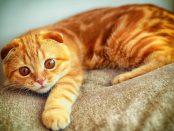 remedios para el estreñimiento en gatos
