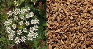 Beneficios del aceite de anis para piel