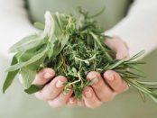 cuales plantas son medicinales para el tratamiento de diabetes