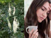 Cimicifuga racemosa: Beneficios y contraindicaciones