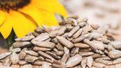 Semillas de girasol beneficios y contraindicaciones